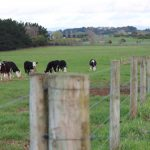 Selling or purchasing a dairy farm – what are the fundamentals?